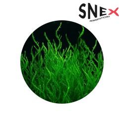 Mech Flame moss